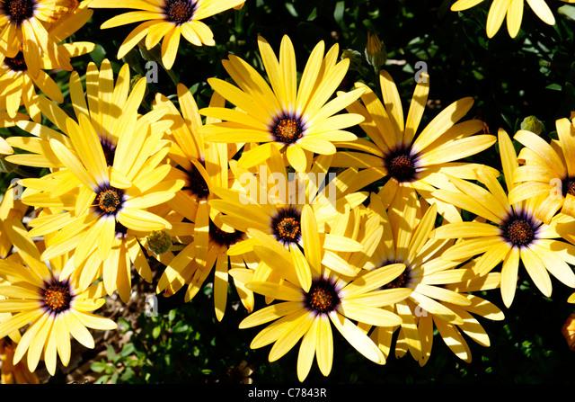 Plante annuelle stock photos plante annuelle stock for Plante annuelle