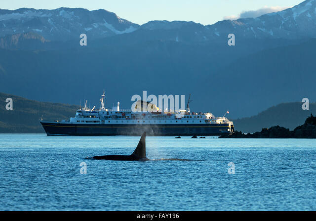 Whale Cruise Ship Alaska Stock Photos Whale Cruise Ship Alaska - Whale cruise ship