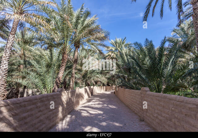 Palm Trees In The Al Ain Oasis, Emirate Of Abu Dhabi, UAE   Stock