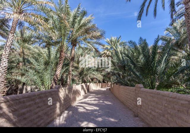 Palm Trees In The Al Ain Oasis, Emirate Of Abu Dhabi, UAE   Stock