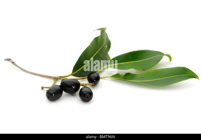 Jaam Stock Photos & Jaam Stock Images - Alamy