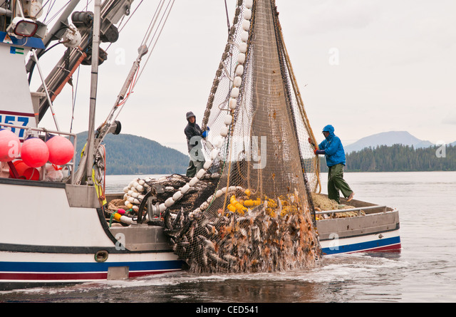 Salmon seine stock photos salmon seine stock images alamy for Purse seine fishing