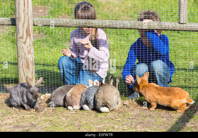 rabbits eating stock photos rabbits eating stock images alamy. Black Bedroom Furniture Sets. Home Design Ideas