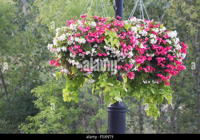 Hanging Flower Baskets Calgary : Eau claire calgary stock photos