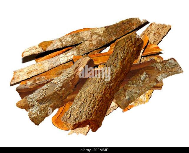 Cinchona Tree Stock Photos & Cinchona Tree Stock Images - Alamy