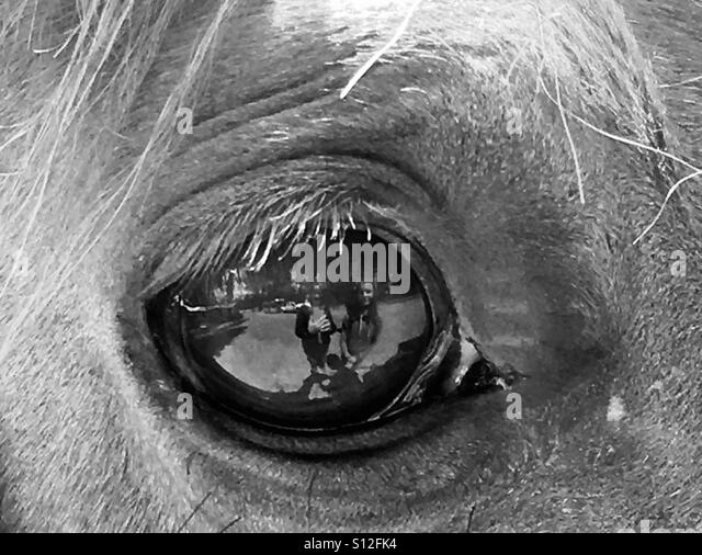 Black and white horse eye photography