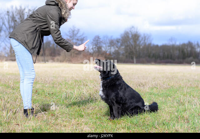 how to teach my dog to sit and stay