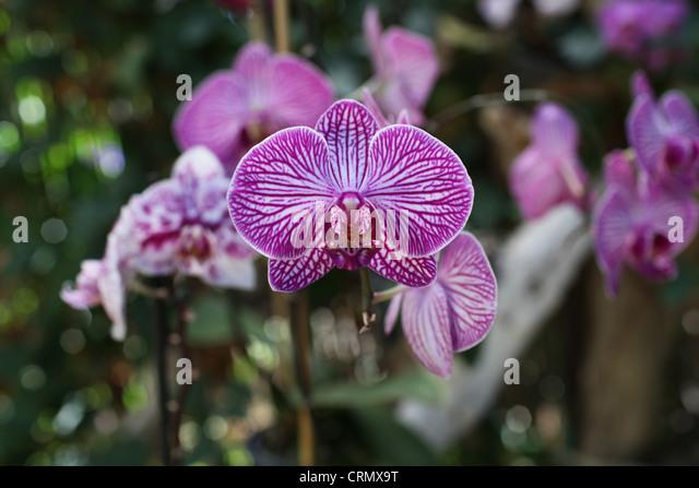 Orquideas stock photos orquideas stock images alamy for Jardines de orquideas