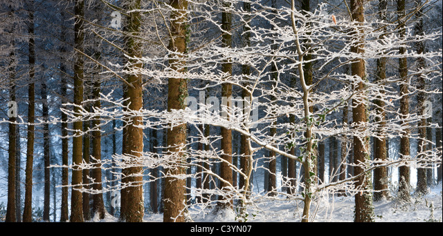 Sweet Snowing Stock Photos  Snowing Stock Images  Alamy With Heavenly Snow And Ice Covered Trees In A Pine Woodland Morchard Wood Morchard  Woodland With Astonishing Garden Bell Also Easter Garden Craft In Addition Garden Sheds For Sale In Manchester And Fareham Garden Centre As Well As  X  Garden Shed Additionally Potting Shed Garden Signs From Alamycom With   Heavenly Snowing Stock Photos  Snowing Stock Images  Alamy With Astonishing Snow And Ice Covered Trees In A Pine Woodland Morchard Wood Morchard  Woodland And Sweet Garden Bell Also Easter Garden Craft In Addition Garden Sheds For Sale In Manchester From Alamycom