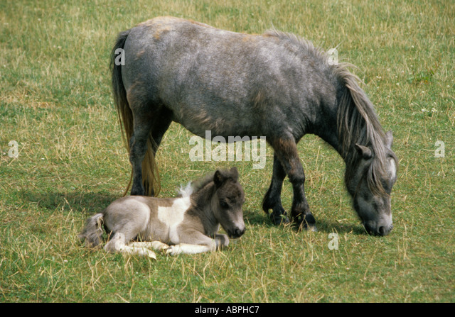 mare and new born foal stockfotos mare and new born foal bilder alamy. Black Bedroom Furniture Sets. Home Design Ideas
