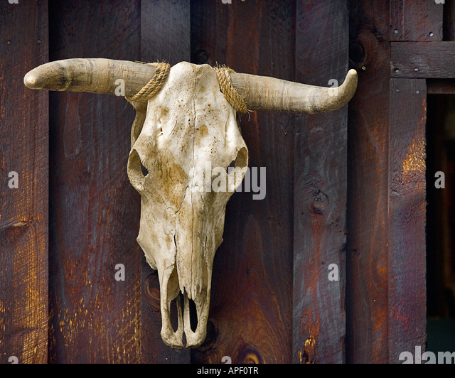 Bovine Skeleton Stockfotos & Bovine Skeleton Bilder