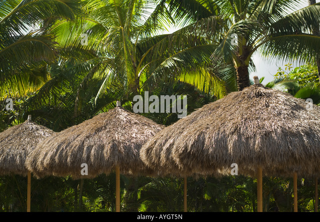 thatch palm stockfotos thatch palm bilder alamy. Black Bedroom Furniture Sets. Home Design Ideas