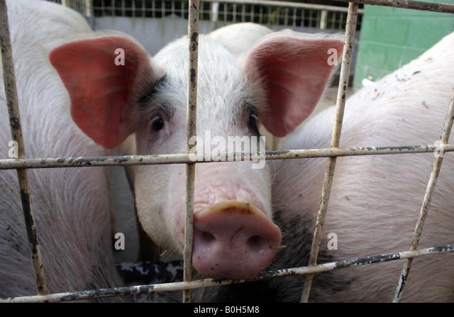 Beste Schwein Drahtzaun Panels Zeitgenössisch - Die Besten ...