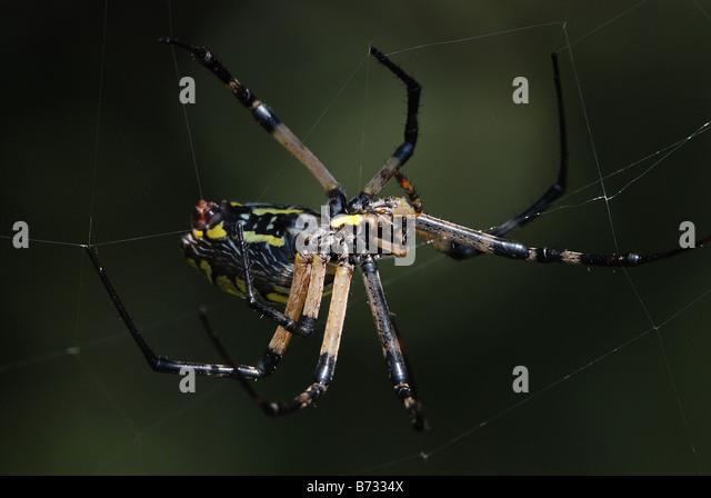 spider spinning stockfotos spider spinning bilder seite 10 alamy. Black Bedroom Furniture Sets. Home Design Ideas