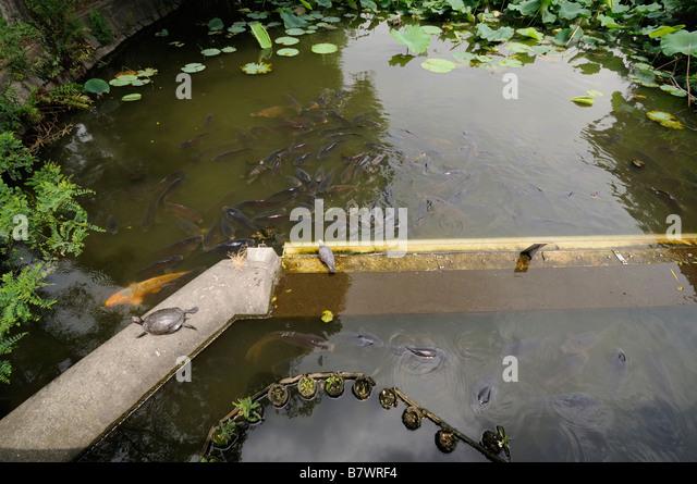 Tokyo japan fish pond stockfotos tokyo japan fish pond for Teich mit fischen