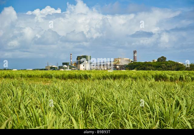 Sugarcane Plantation Factory Stockfotos & Sugarcane Plantation Factory Bilder - Alamy