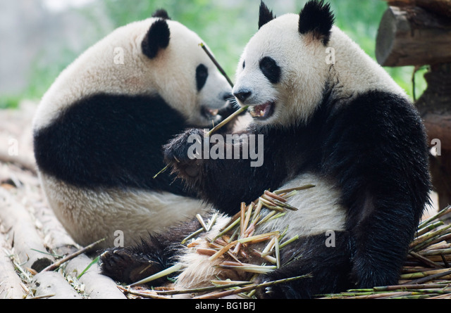 chengdu stockfotos chengdu bilder alamy. Black Bedroom Furniture Sets. Home Design Ideas