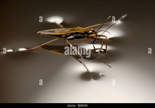 invertebrates stockfotos invertebrates bilder alamy. Black Bedroom Furniture Sets. Home Design Ideas