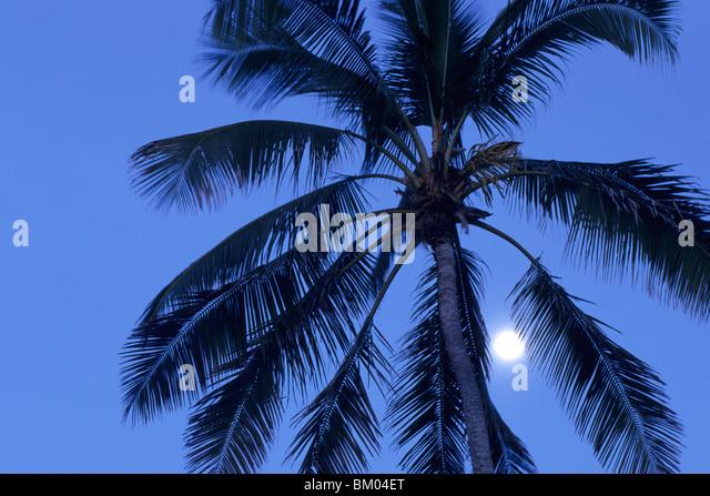 tree moon night low angle stockfotos tree moon night low angle bilder alamy. Black Bedroom Furniture Sets. Home Design Ideas