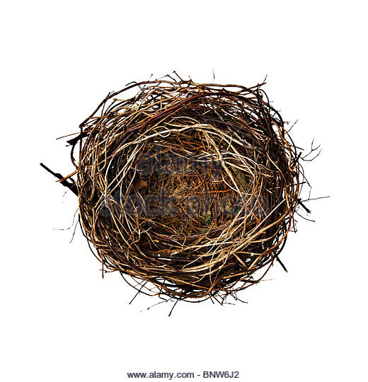 empty nest birds nest stockfotos empty nest birds nest bilder alamy. Black Bedroom Furniture Sets. Home Design Ideas