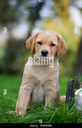Puppy Stockfotos &...