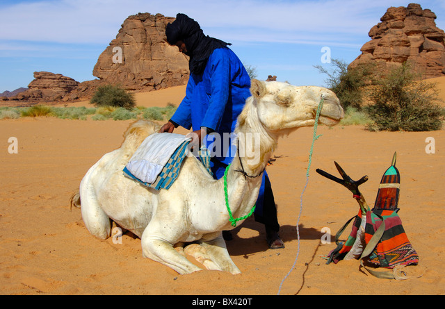 tuareg man on camel stockfotos tuareg man on camel bilder alamy. Black Bedroom Furniture Sets. Home Design Ideas