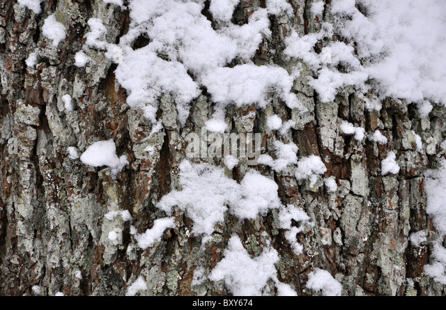 winter protect tree stockfotos winter protect tree bilder alamy. Black Bedroom Furniture Sets. Home Design Ideas