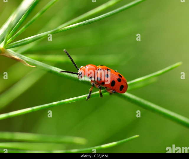 insect stockfotos insect bilder alamy. Black Bedroom Furniture Sets. Home Design Ideas