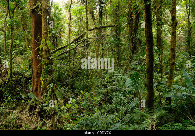 creepers in tropical rainforest stockfotos creepers in tropical rainforest bilder alamy. Black Bedroom Furniture Sets. Home Design Ideas
