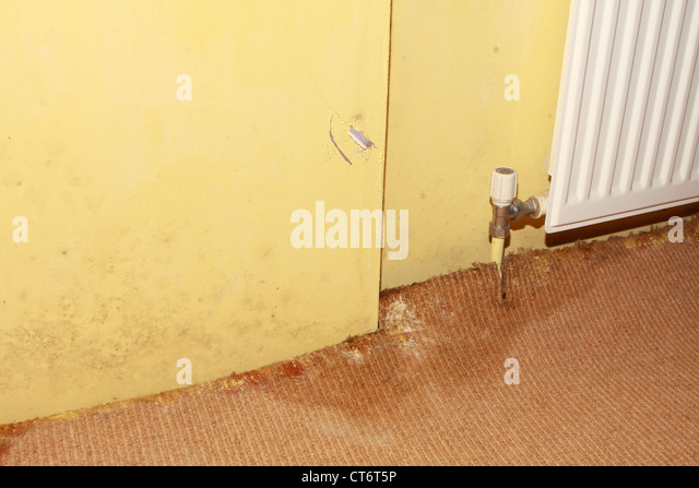 Damage cover stockfotos damage cover bilder seite 2 - Feuchtigkeit in wanden ...