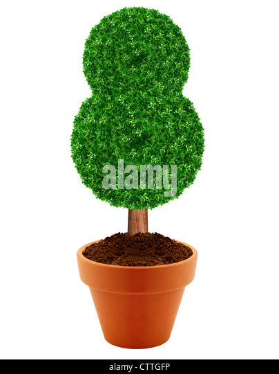 china tree bonsai stockfotos china tree bonsai bilder alamy. Black Bedroom Furniture Sets. Home Design Ideas
