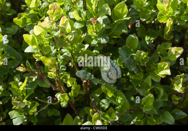 moor plants stockfotos moor plants bilder alamy. Black Bedroom Furniture Sets. Home Design Ideas