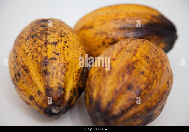 Ripe cocoa pods stockfotos ripe cocoa pods bilder alamy for Gelbe tafeln