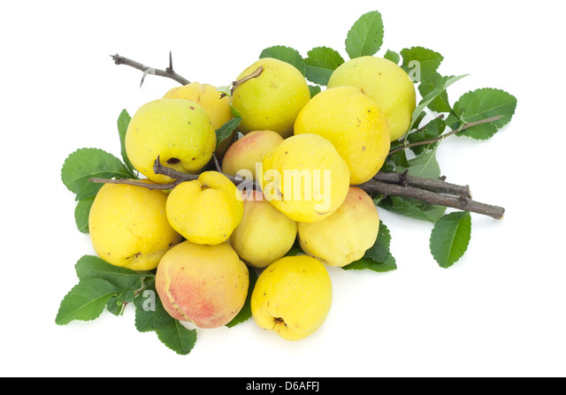 branches with fruits stockfotos branches with fruits bilder alamy. Black Bedroom Furniture Sets. Home Design Ideas