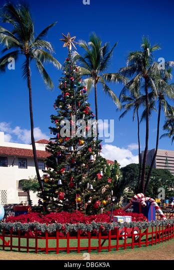 traditional hawaiian christmas tree hawaii stockfotos. Black Bedroom Furniture Sets. Home Design Ideas