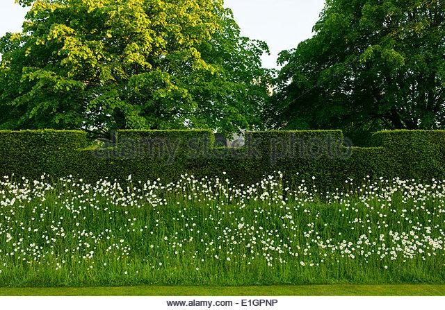 yew taxus hedge stockfotos yew taxus hedge bilder alamy. Black Bedroom Furniture Sets. Home Design Ideas