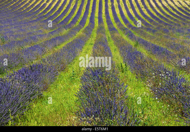 monieux provence stockfotos monieux provence bilder alamy. Black Bedroom Furniture Sets. Home Design Ideas