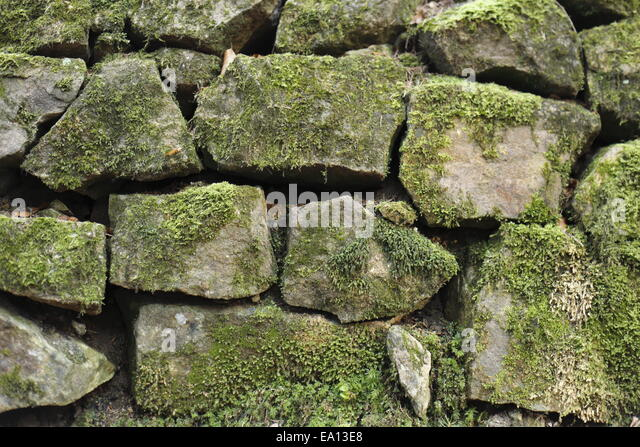moss wall interior stockfotos moss wall interior bilder alamy. Black Bedroom Furniture Sets. Home Design Ideas