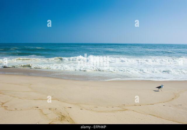 the hamptons beach stockfotos the hamptons beach bilder alamy. Black Bedroom Furniture Sets. Home Design Ideas