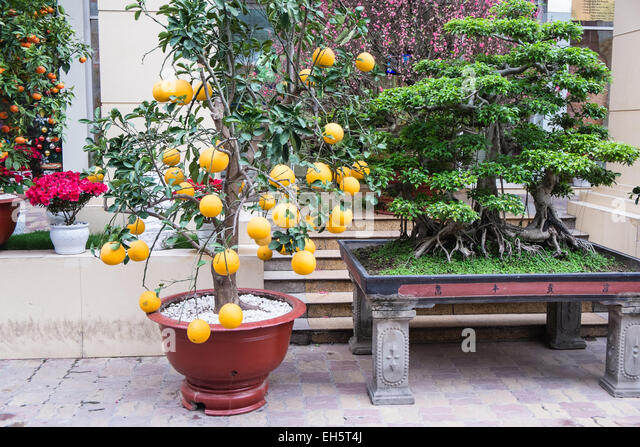 kumquat festival stockfotos kumquat festival bilder alamy. Black Bedroom Furniture Sets. Home Design Ideas