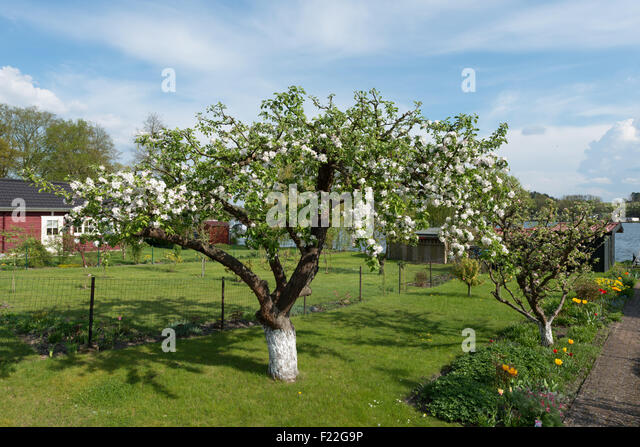 knospen stockfotos knospen bilder alamy. Black Bedroom Furniture Sets. Home Design Ideas