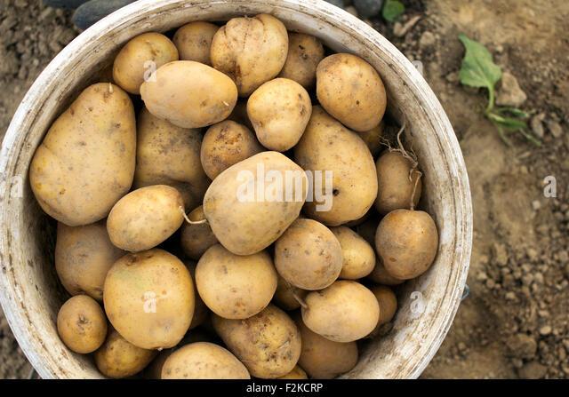 potato soil stockfotos potato soil bilder seite 21 alamy. Black Bedroom Furniture Sets. Home Design Ideas