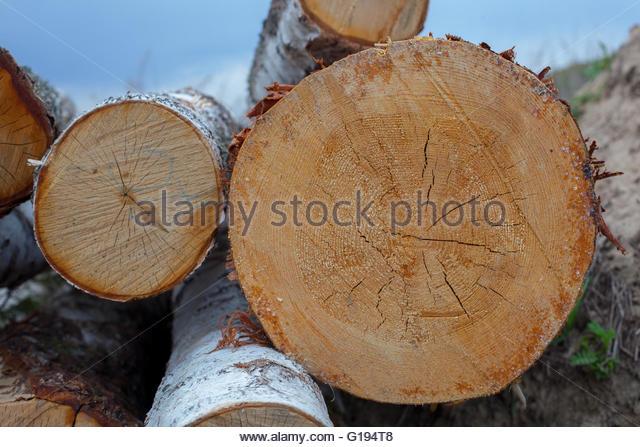 wood tree log rings stockfotos wood tree log rings. Black Bedroom Furniture Sets. Home Design Ideas