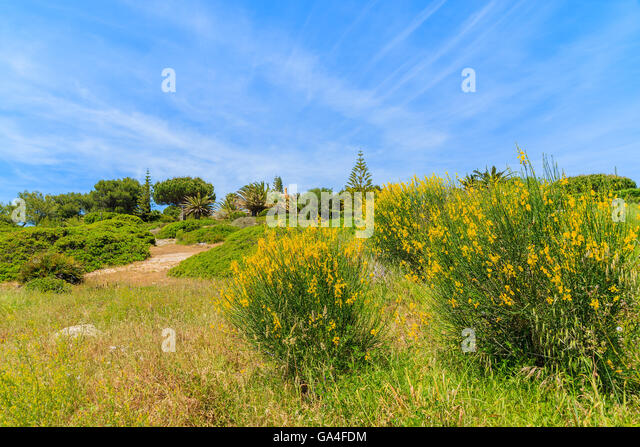 field flowers algarve portugal stockfotos field flowers algarve portugal bilder alamy. Black Bedroom Furniture Sets. Home Design Ideas