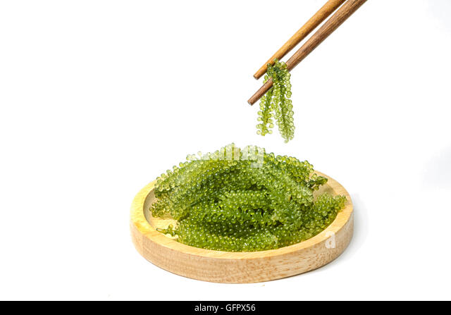 Caulerpa stockfotos caulerpa bilder seite 3 alamy for Grune algen