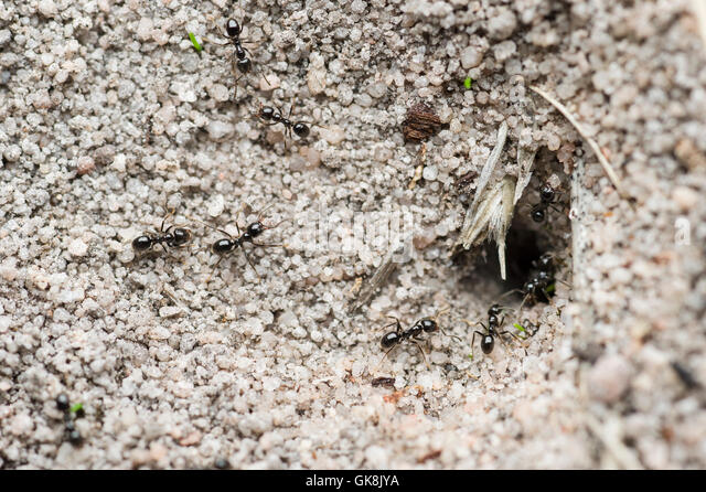 ant hole sand stockfotos ant hole sand bilder alamy. Black Bedroom Furniture Sets. Home Design Ideas