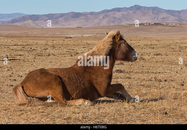 Genghis khan horse stockfotos genghis khan horse bilder for Wildparks in der nahe