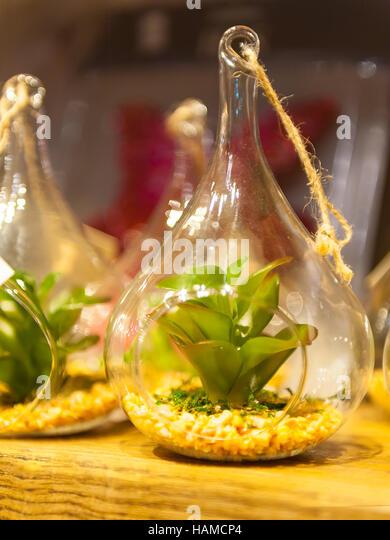 tropical terrarium stockfotos tropical terrarium bilder alamy. Black Bedroom Furniture Sets. Home Design Ideas