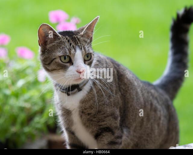 Katze stockfotos katze bilder alamy - Grun schwarzer stuhl ...