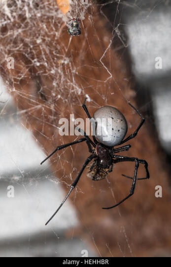 spider madagascar stockfotos spider madagascar bilder alamy. Black Bedroom Furniture Sets. Home Design Ideas